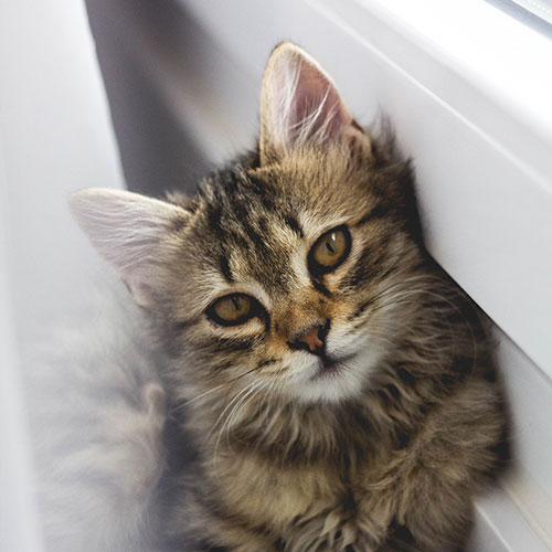 Cat leaning against a wall