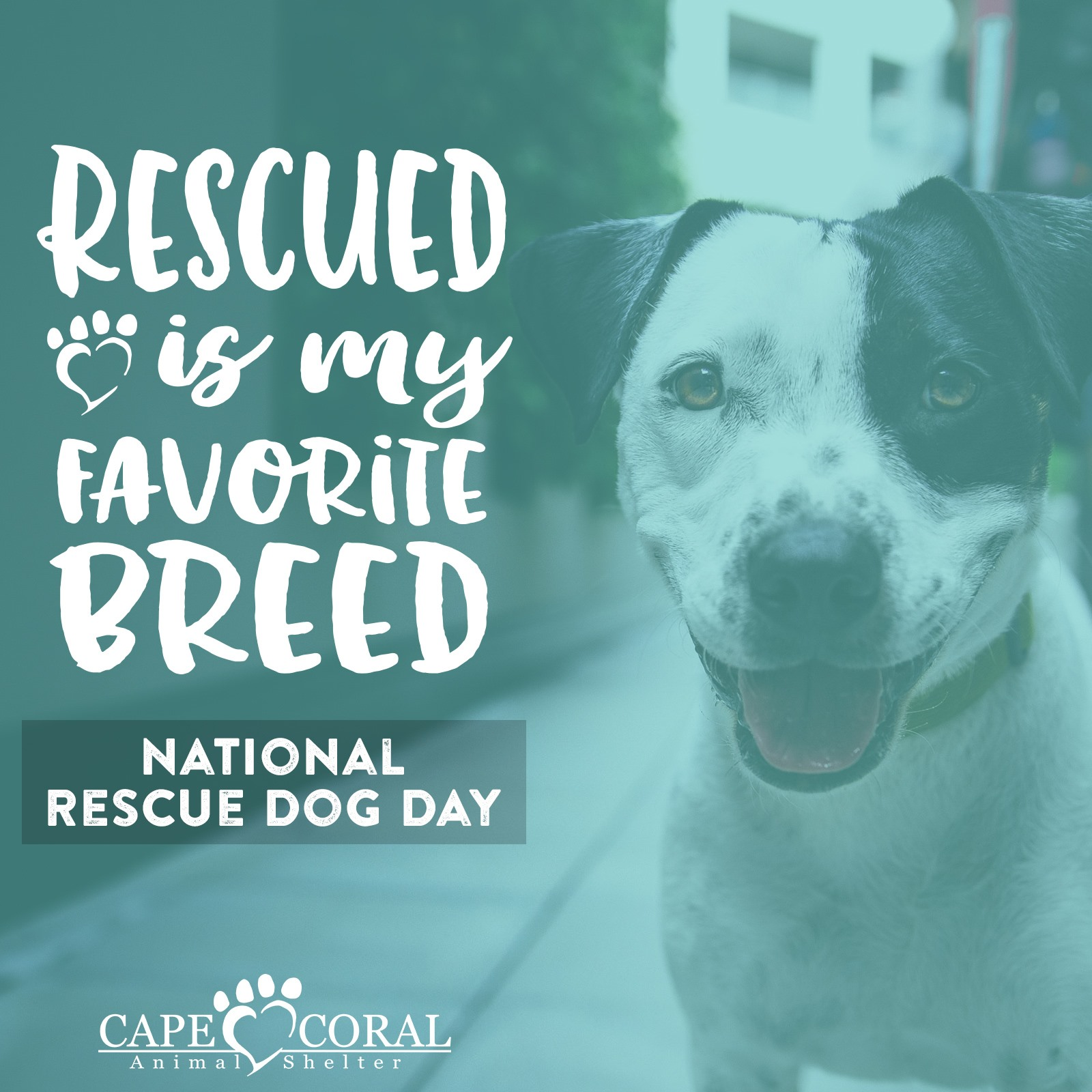National Rescue Dog Day